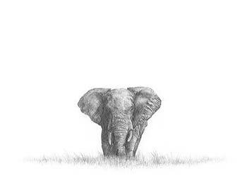 African Elephant 3