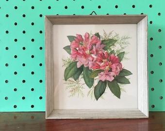Vintage floral framed print - shabby chic - botanist - natural history - botanical 1950s - flower