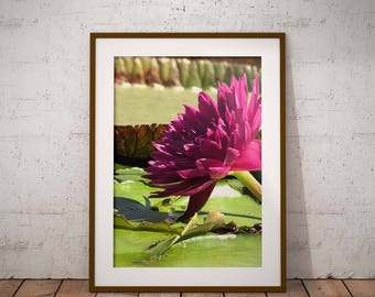 Dark Pink Waterlily, vertical wall art, high resolution download, downloadable photo, nature photography, flower wall art