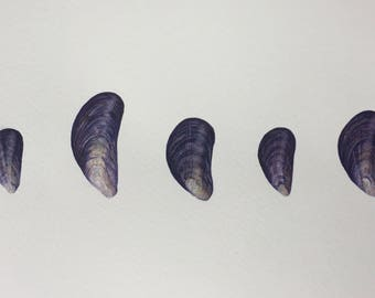 Limited edition giclee print of 5 blue mussels.