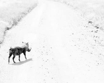 Limited edition fine art wildlife photography print: 'Roaming'