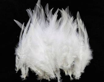 set of 50 white 10-15cm feathers