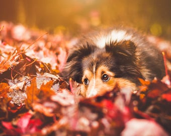 Autumn/Fall Lightroom Presets for Lightroom 4,5,6 and CC Instant Download