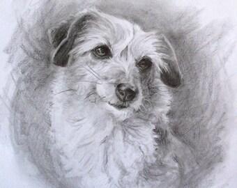 30 x 40 cm Original Custom Graphite Pet Portrait, Commission a Pencil Drawing of Your Pet, Dog Cat Horse Parrot Hamster...