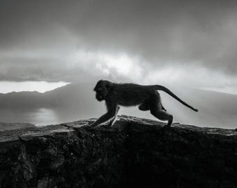 Monkey on Mount Batur Bali Indonesia in Black and White Instant Digital Download  Personal or Commercial Use