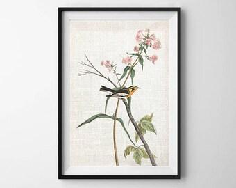 Audubon Bird Print, PRINTABLE ART, Wall Decor, Botanical Print, Bird Art, Vintage Artwork, Poster, Warbler Print, Nature print, Flower Art