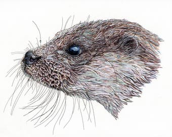 Print of an original pen and ink otter portrait A4 size