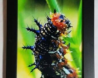 Caterpillar Not so Common