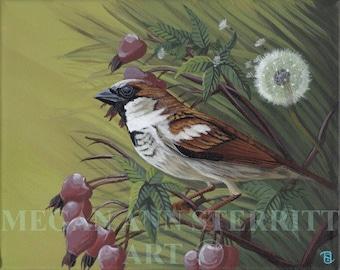 """House Sparrow - PRINT, 8""""x10"""", giclee, by Megan Ann Sterritt."""