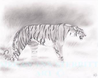 "Bengal Tiger - Original drawing, 11""x 14"", graphite on paper, by Megan Ann Sterritt."