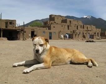 Dog of Taos