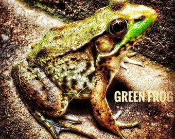 Green Frog Printable