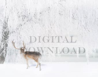 DIGITAL BACKGROUND REINDEER and snow scene