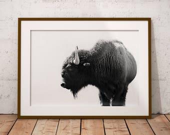 Urban Buffalo Print *Frame not included*