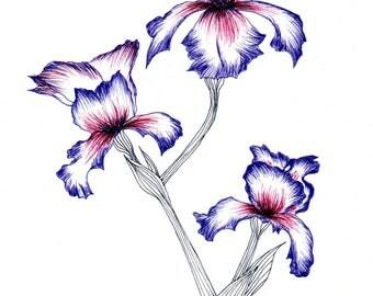 Viola Tricolor (print)