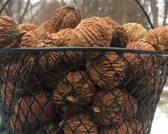 Black Walnuts (1 lb. or 3 lb at discount with free basket)