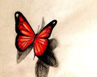 Pencil butterfly drawing, realism drawing