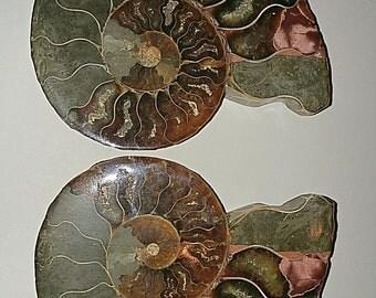 Stunning ammonite pair