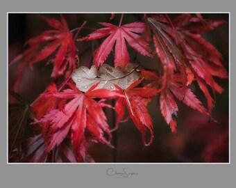 Fallen Leaf Print 10x8
