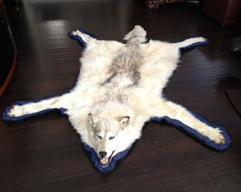 "Beautiful 80"" Arctic Wolf Skin Rug"