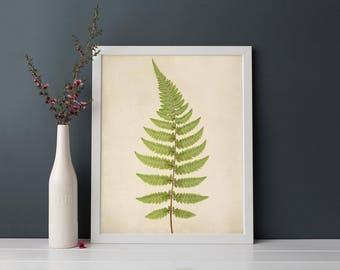 Fern Wall Art Print, Living Room Decor, Bedroom Decor, Kitchen Wall Art, Modern Rustic Home Decor, Dining Room Art, Fern Botanical Print