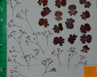 Real Pressed Dried Flowers 3 Stems of Tiny Pink Coral Bell, and Dark Red flowers, Ready for your project Craft supply