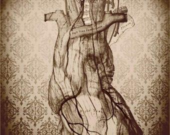 50% OFF SALE Anatomical Heart Decor, Anatomy Print, Heart, Dark, Victorian, Wood Heart, Sepia, Neutral, 8x8 inch Fine Art Print, My Wooden H