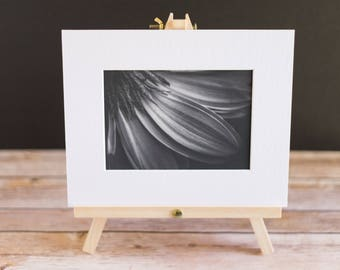 Fine Art Macro 5x7 Black and White Matted Print - Daisy Detailed