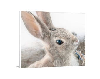 Bunny Picture, Rabbit Photograph, Cottontail, Bunny Rabbit, Cute Animals, Photo on Canvas, Picture Gift, Mammals, Wall Art, Wildlife Art