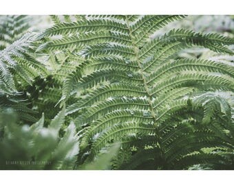 Fern Photography Greenery Art Botanical Print Fern Art Nature Photography Frond Print Dreamy Photography Plant Print Rustic Decor Woodland