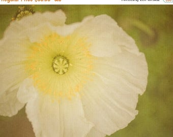 SUMMER SALE-Ends July 5- Poppy photograph Flower Photography Spring Photo White Poppies Feminine Neutral Colors Wall Art Home Decor nat120