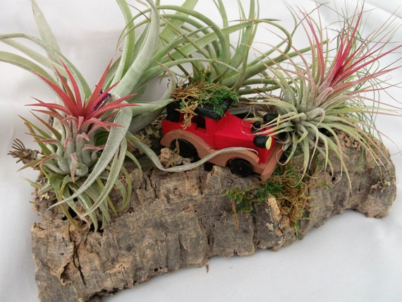 In air plant land a long long time ago a little vintage car got lost on his way to the North Pole.  He needs help finding his way.