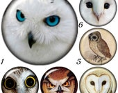 SALE Snap charms......  Owl Snap Charms will fit Ginger Snaps Jewelry plus other regular sized 18-20 mm snap jewelry. Half Price!
