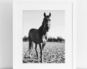 Equestrian Photograph, Black and White Horse Art, Physical Print Horse Photography