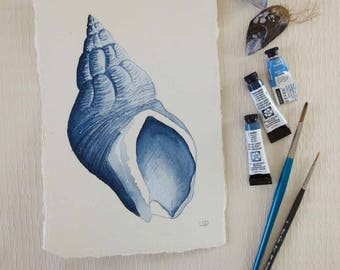 Original watercolour painting of a whelk sea shell in blues and indigo treasures from the shore series