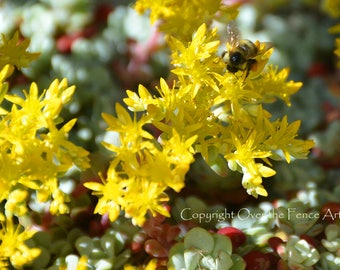 Bee on Yellow Flowers Photo Card