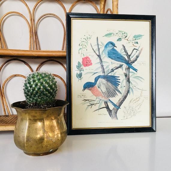 Vintage Bird Print Framed Arthur Singer Bluebird and Botanical Print Boho Wall Hanging