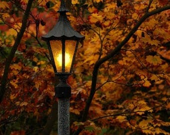 Lamp post Photo, Light in the autumn woods, light in the dark, wall decor, home decor, cottage decor, Seattle photo, Japanese Garden photo
