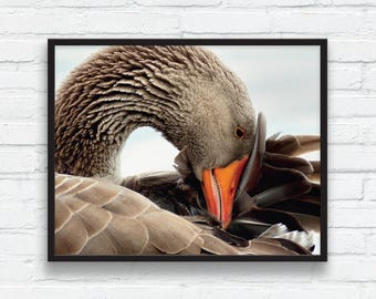 Wild Goose Portrait Printable Art, Photo Montage Animal Wall Art, Goose photography, Nature Art, Brown Goose, Geometric Digital Printable