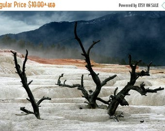 On Sale Mammoth Hot Springs 3, Yellowstone National Park, Springs, Hot Springs