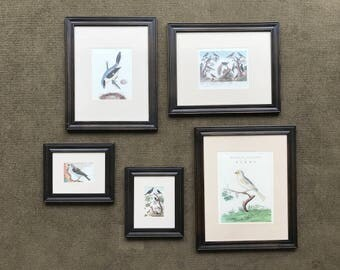 Five Vintage Bird Prints in Frames - Instant Gallery Wall