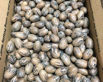 Whole Pecans in Shell - 10 lbs - Fresh 2017 Crop, Free Shipping