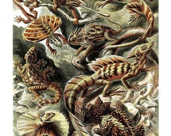 Ernst Haeckel's Vintage Artwork Lacertilia