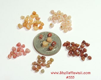 100 mix color and size (13 and bigger ) Kahelelani shells from Kauai #555 (assorted)