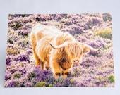Highland Cow Card, Scottish Cow Card, Highland Cow Art, Highland Cow Photograph, Scottish Card