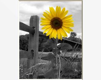 Sunflower Decor, Yellow Sunflower Wall Art, Country/Farmhouse Wall Art Matted Picture