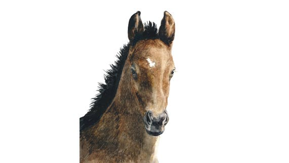 Original 8x10 Watercolor Foal Painting