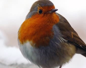 Winter Bird - Robin - Christmas - Digital Download