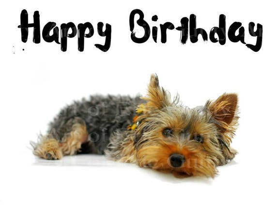 Yorkie Puppy Dog Happy Birthday - Edible Cake and Cupcake Topper For Birthdays and Parties! - D22879