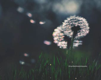 Dandelion wall art, dandelion print, dandelion photography, grass, macro, floral fine art print, nature moody bedroom wall decor, home decor